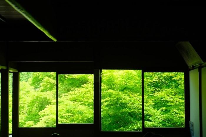 瑠璃光院の青もみじと苔の撮影スポット