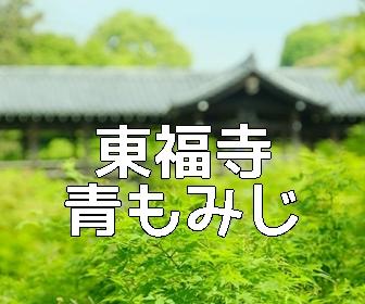 京都・青もみじと苔の撮影スポット東福寺