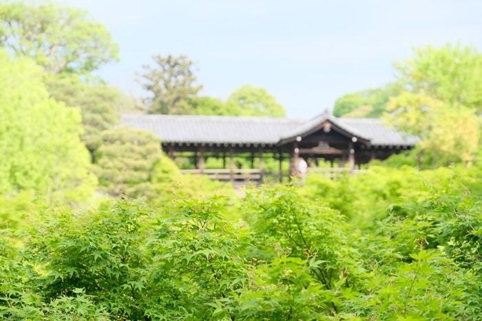 京都青もみじの撮影スポット 東福寺