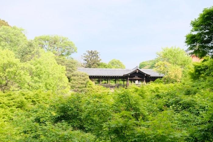 東福寺の青もみじと苔の撮影スポット