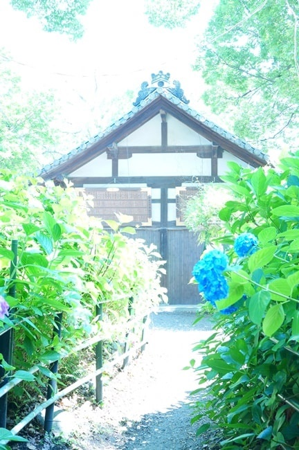藤森神社の紫陽花の撮影スポット
