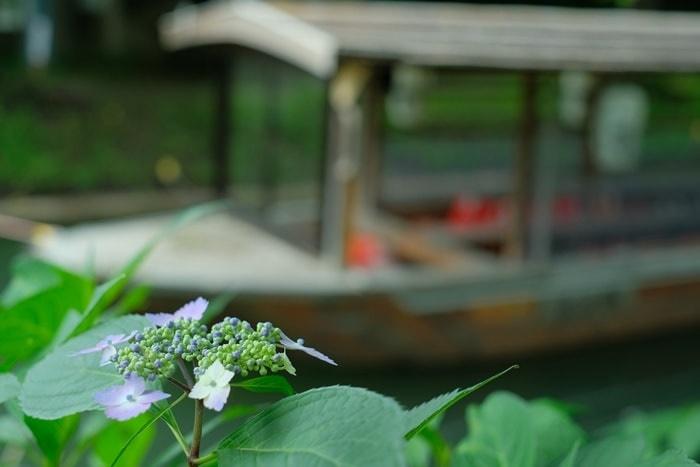 京都紫陽花の撮影スポット・伏見濠川沿い