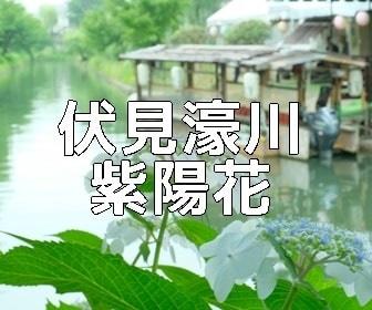 京都・紫陽花の撮影スポット・伏見・濠川