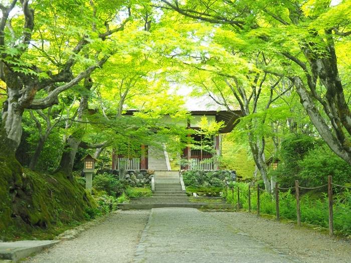京都青もみじと苔の撮影スポット・常寂光寺