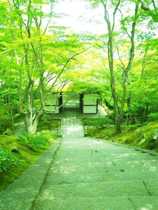 常寂光寺の青もみじと苔の撮影スポット