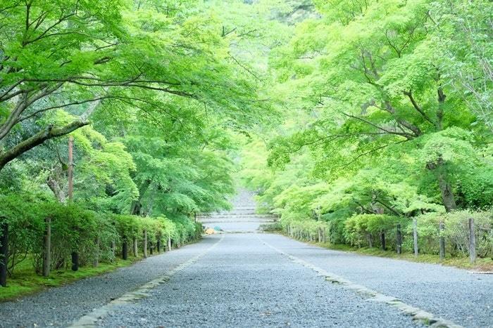 京都・青もみじの撮影スポット・二尊院