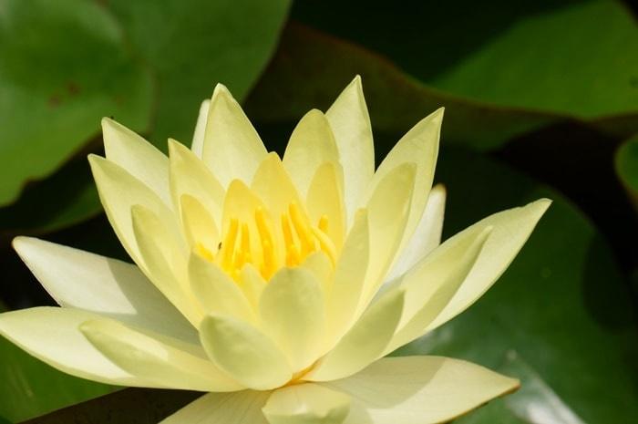 平安神宮 睡蓮の撮影スポット