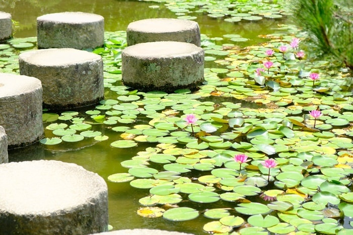 平安神宮での睡蓮の撮影スポット