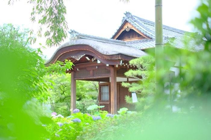 京都紫陽花の撮影スポット紫陽花