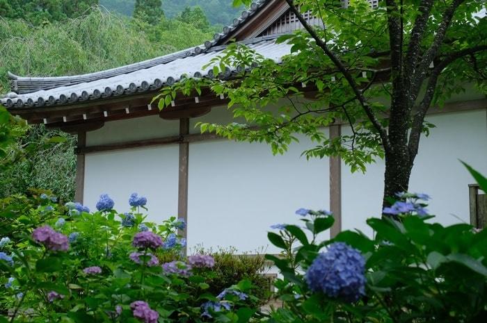 三千院の紫陽花撮影スポット
