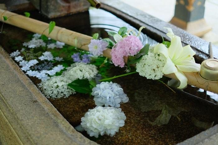 京都紫陽花の撮影スポット真如堂