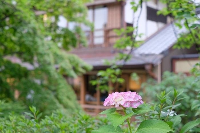 祇園白川の紫陽花の撮影スポット