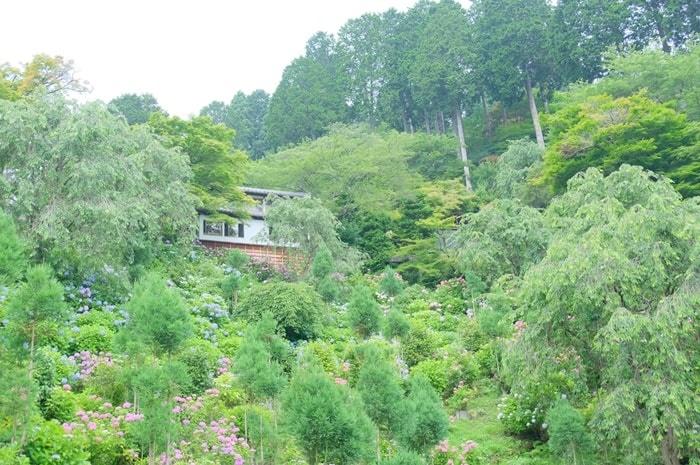 善峯寺の紫陽花の撮影スポット