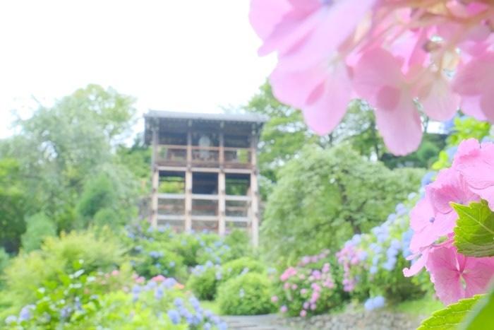 善峯寺の紫陽花の見頃と混雑
