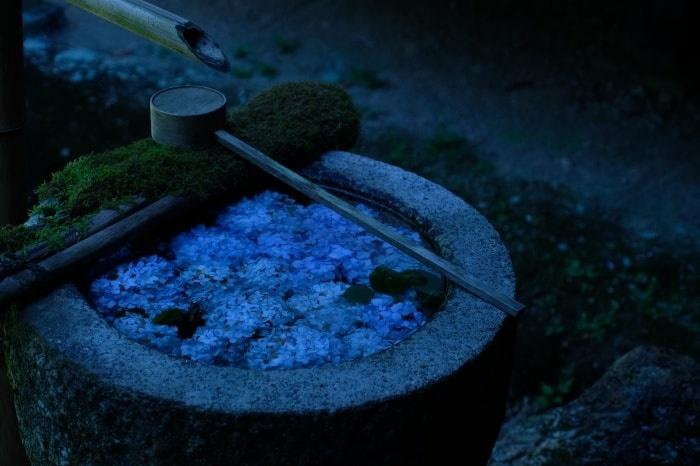 京都 紫陽花の撮影スポット 楊谷寺