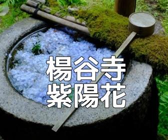 京都・紫陽花の撮影スポット・楊谷寺