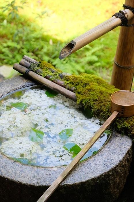 楊谷寺の紫陽花撮影スポット