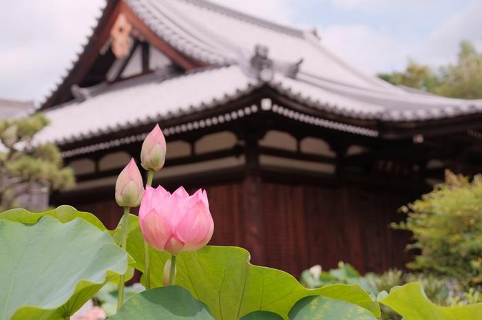 法金剛院の蓮の撮影スポット