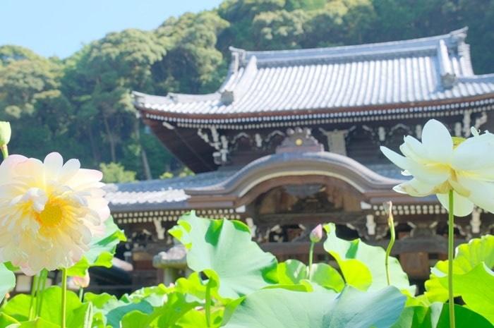 三室戸寺の蓮の撮影スポット
