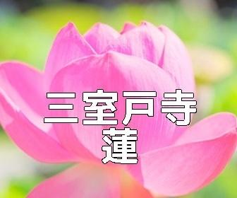 京都・蓮とスイレンの撮影スポット・三室戸寺