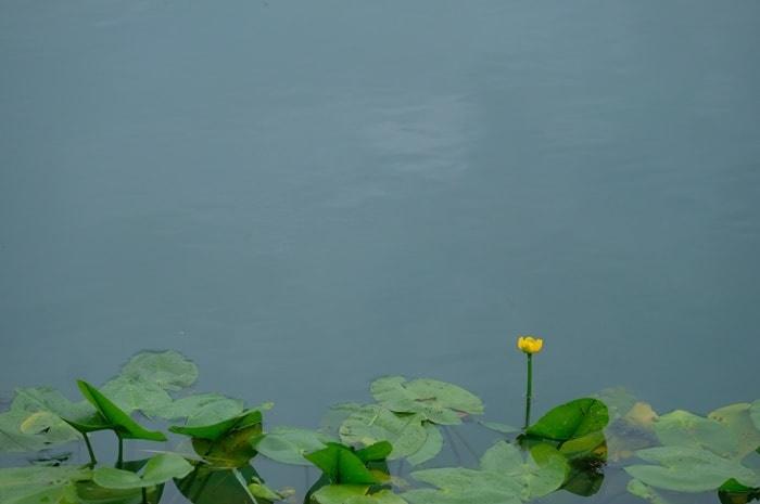 長岡天満宮八条ヶ池のこうぼねの撮影の撮影スポット