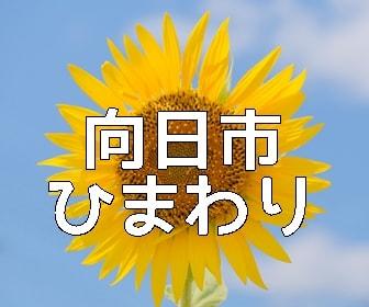 京都・ひまわりの撮影スポット・向日市