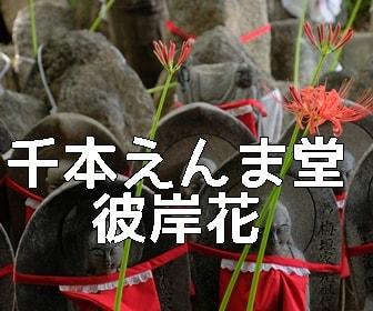 京都・彼岸花の撮影スポット 千本えんま堂