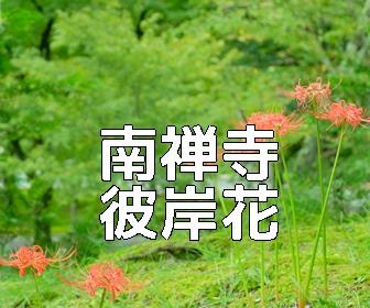 京都・彼岸花の撮影スポット 南禅寺