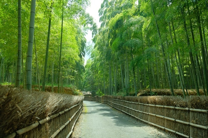 竹の径の撮影スポット