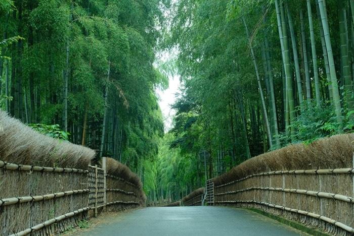 京都らしい風景が撮影できる撮影スポット 竹の径