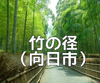 京都らしい風景が撮れる撮影スポット・向日市・竹の径