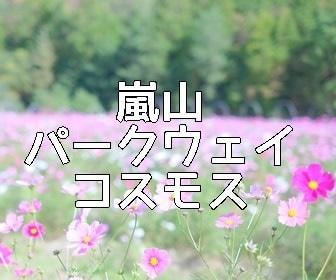京都・コスモスの撮影スポット 嵐山・高雄パークウェイ