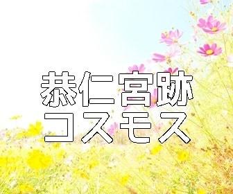 京都・コスモスの撮影スポット 恭仁宮跡