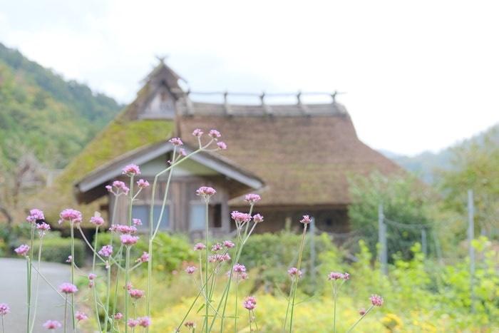 美山のノスタルジックな撮影スポット フジバカマ