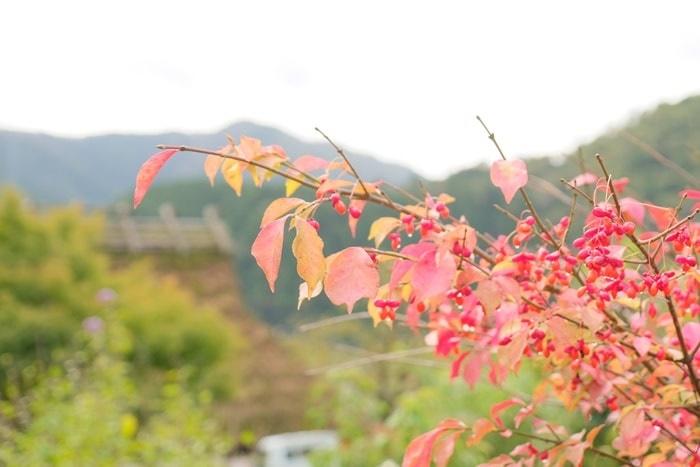 美山のノスタルジックな撮影スポット