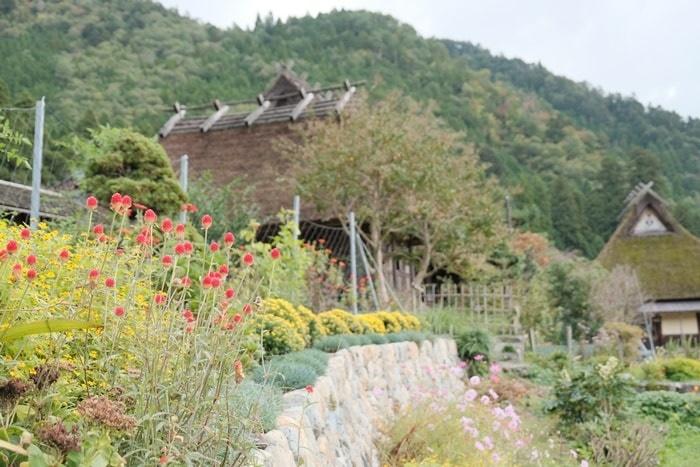 美山のノスタルジックな撮影スポット コスモス