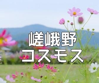 京都・コスモスの撮影スポット 北嵯峨