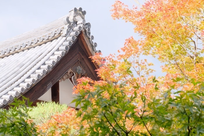 京都の紅葉撮影スポット 永観堂