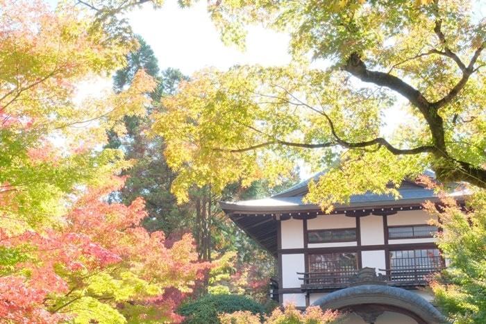 フォトジェニックな永観堂 紅葉撮影スポット