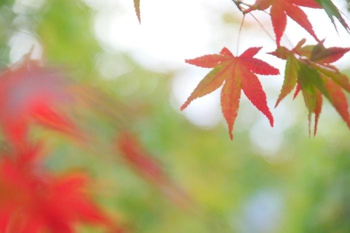 永観堂の紅葉の見頃と混雑