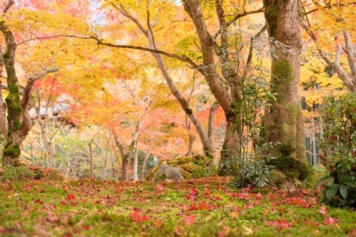 圓光寺のフォトジェニックな紅葉撮影スポット