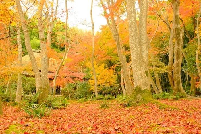 京都紅葉の撮影スポット祇王寺