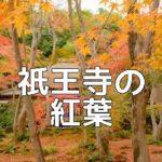 京都の紅葉撮影スポット 祇王寺