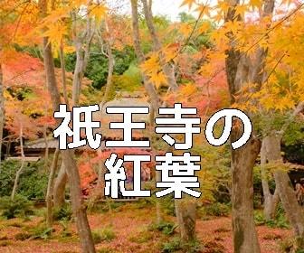 京都・紅葉の撮影スポット祇王寺