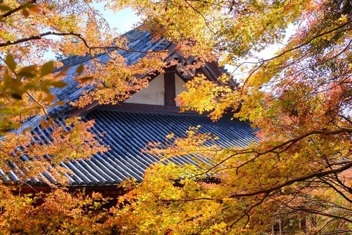 京都紅葉の撮影スポット・神護寺