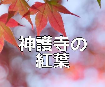 京都・紅葉の撮影スポット神護寺