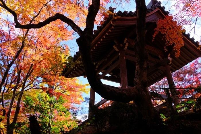 フォトジェニックな常寂光寺の紅葉撮影スポット