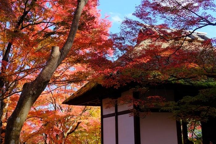 京都の紅葉撮影スポット 常寂光寺