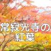 京都紅葉の撮影スポット 常寂光寺