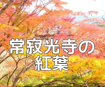 京都・紅葉の撮影スポット・常寂光寺